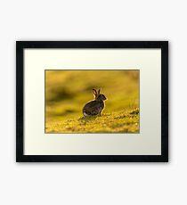 Cute Wildlife Golden Hour Framed Print