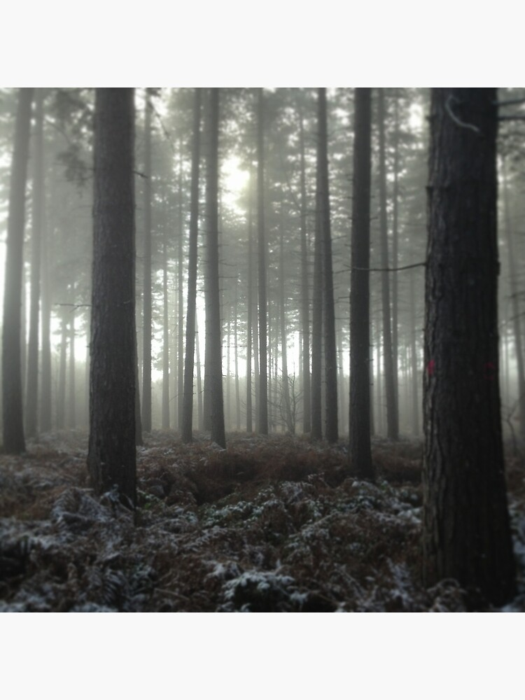 Sherwood Forest by robsteadman
