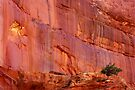 Wall Art ~ Capitol Reef, UT USA by Vicki Pelham