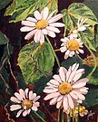 Contrasting Daisies by Jim Phillips