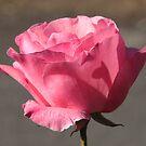 Pretty in Pink by Pamela Jayne Smith