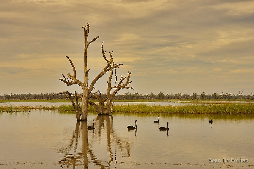 Banrock Wetlands, South Australia by PC1134