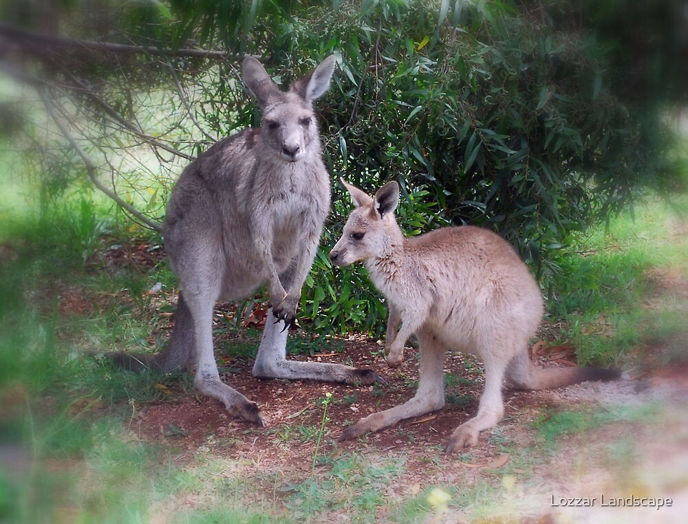 Kangaroos at Buchan by Lozzar Landscape