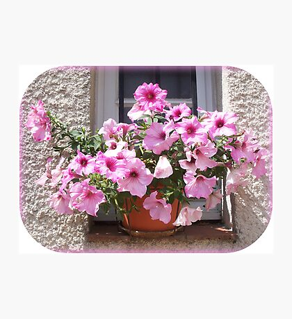 A flowery window Photographic Print