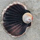Shells by Jessy Willemse