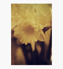Pale Yellow Photographic Print