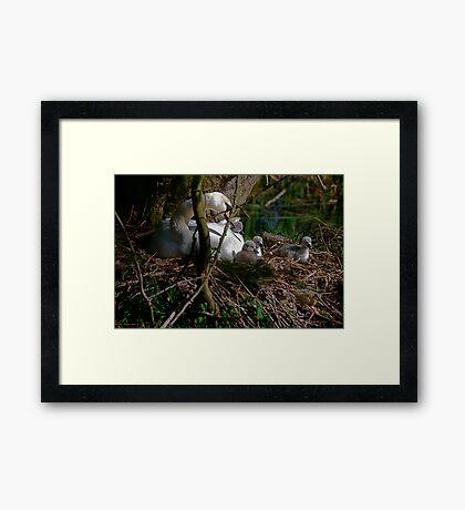 New Life 2 - (in  the nest) Framed Print