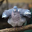 Dove of peace) by Natalia1380