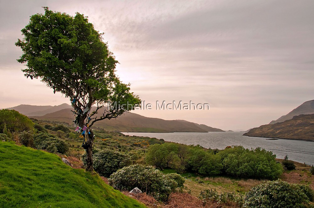my favourite tree.. by Michelle McMahon