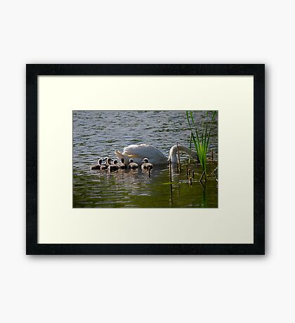 New Life.  First Day On The Water. Framed Print
