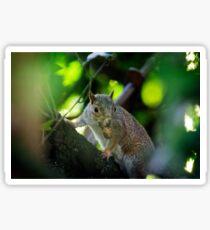 Squirrel With Peanut Sticker