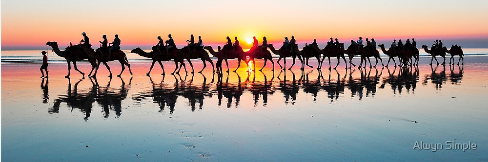 Camels on Cable Beach Broome at Sunset  by Alwyn Simple