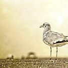 The Seagull by Pat Moore