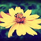 Retro flower by islefox