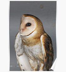 Barn Owl - Casper Poster