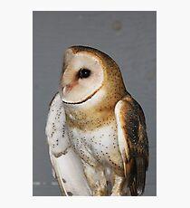 Barn Owl - Casper Photographic Print