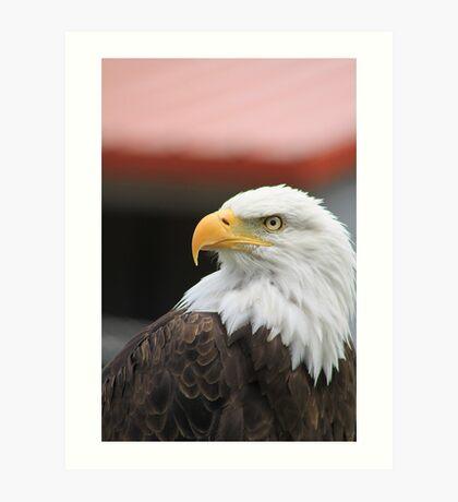"""Bald Eagle - """"Jefferson"""" Art Print"""