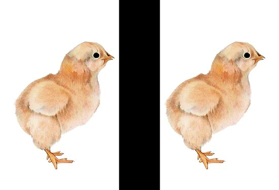 Baby Chicken Quotes: Tattoos Of Quotes: Baby Chicks Pictures